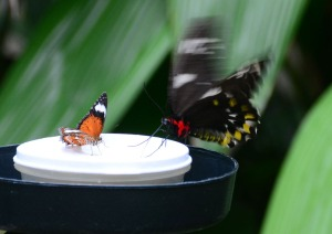 butterfly sanctuary Kuranda